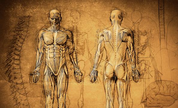 Nevralgia del nervo pudendo, spiegazione